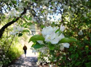 Gallery: Idaho Wildflower Watch