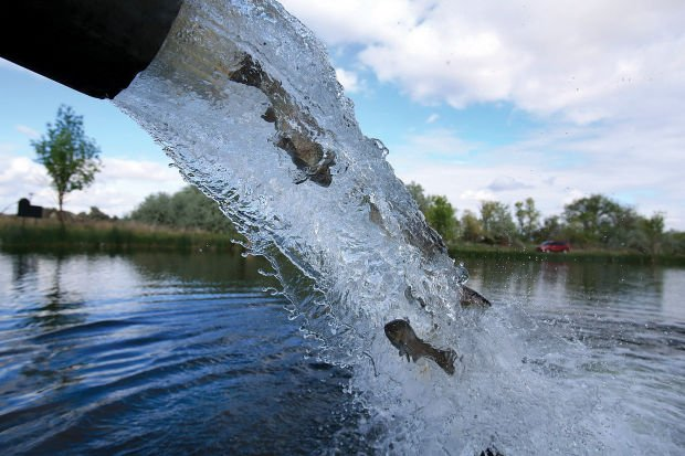 Plenty of trout stocked in western washington lakes for Stocked trout fishing