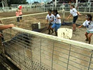 Video: Team Blue Stars Pig Wrestles at the Jerome County Fair