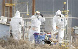 Agencies Scramble to Contain Bird Flu