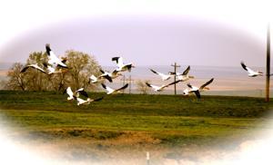Gallery: Birds of Southern Idaho