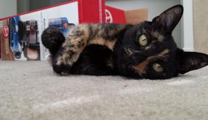 Gallery: Crazy about Your Cat