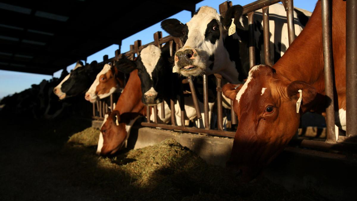 Dairy market looks forward to another flat year, trade key to profitability