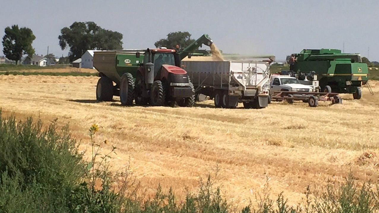 Grain outlook ugly