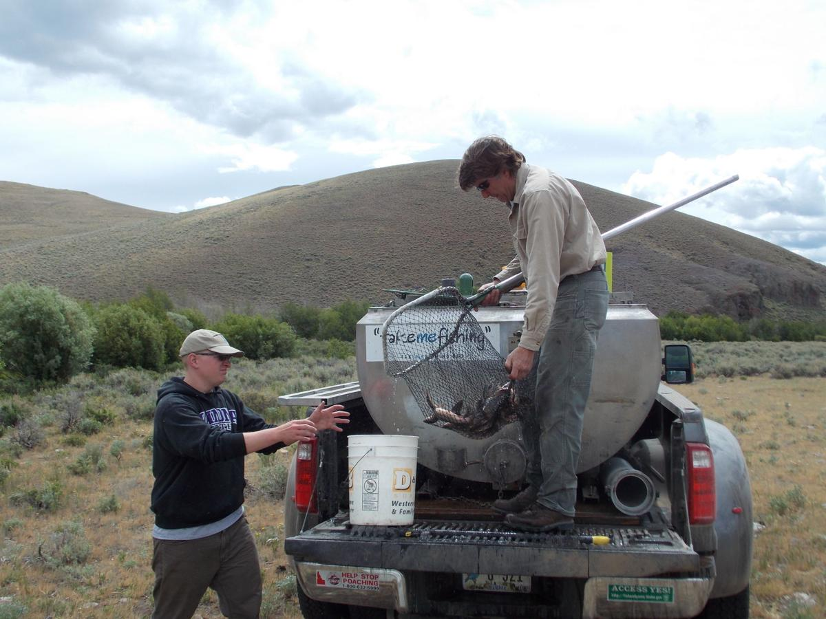 Idaho fish and game pioneers sex altering hormone as brook for Idaho fish and game