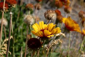 Gallery: Idaho Wildflower Watch