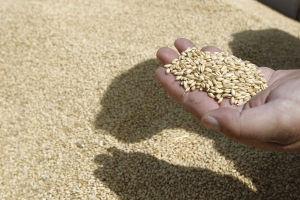 Yummy or Yucky? Idaho Wheat Researchers Seek Children's Advice