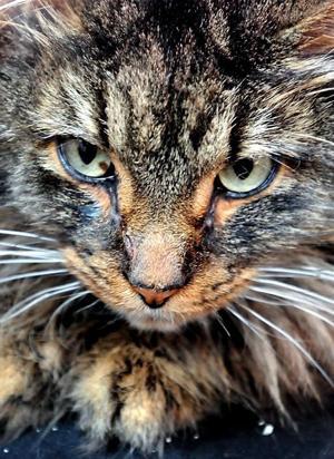 Cat haters2.jpg