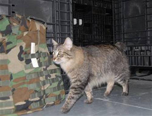 Cats Work on Military Base