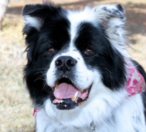 Dogs For Adoption In Western Montana