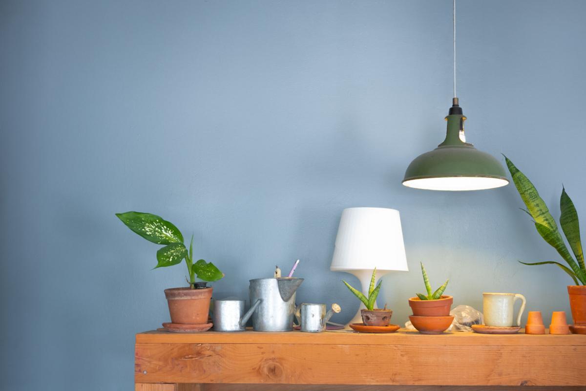 Lighting for indoor plants - Indoor Plants