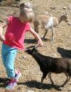 Hamilton kindergartners learn about life, work on farm