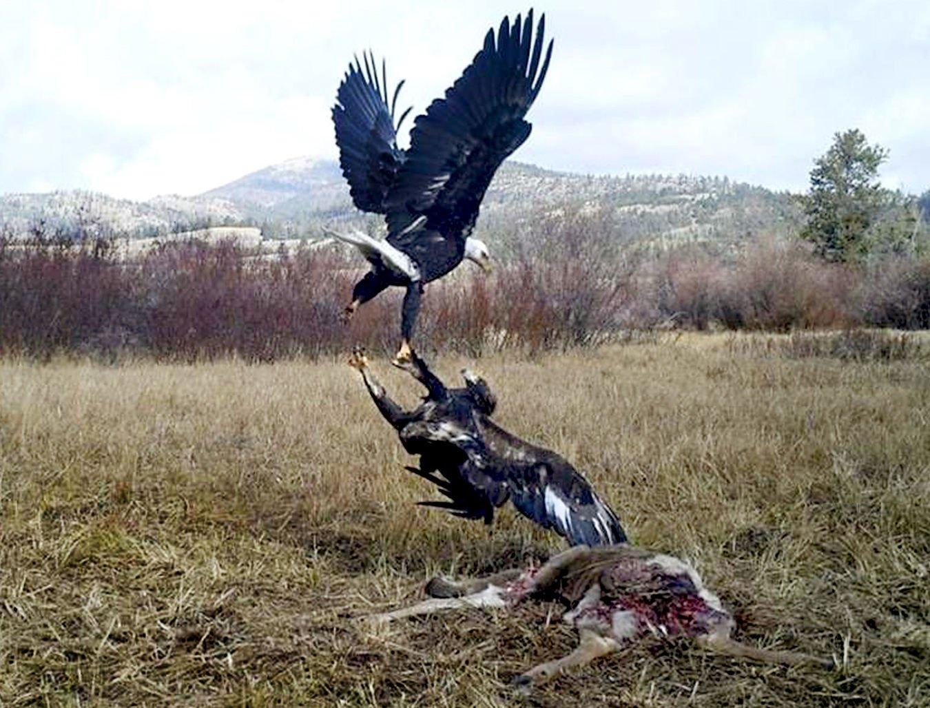 cameras trap wild bird activity in montana without trauma