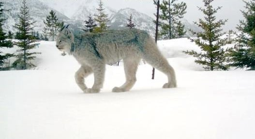 Montana fish wildlife and parks sued over trapping in for Fish wildlife and parks
