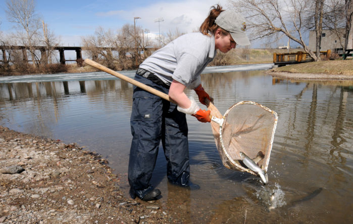 Mccormick park pond stocked with rainbow trout for kids to for Stocked fishing ponds