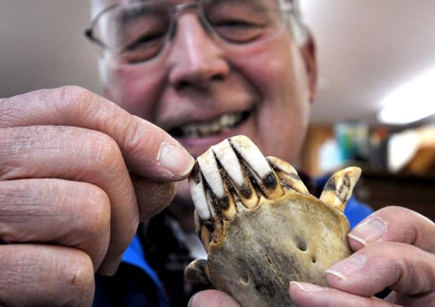 Long in the tooth: Gary Matson leaves legacy of wildlife dental science