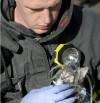 031811 kitten rescued