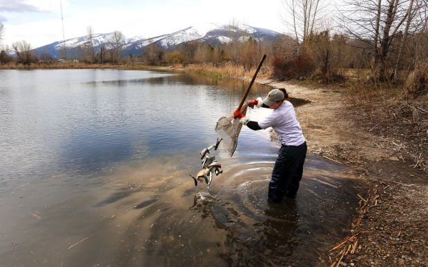 Stocking up 250 trout added to hamilton s hieronymus pond for Stocked fishing ponds near me