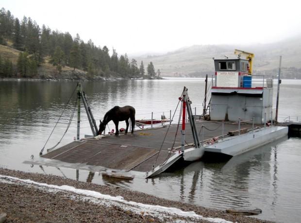 Lone wild horse on wildhorse island gets company montana for Montana fish company