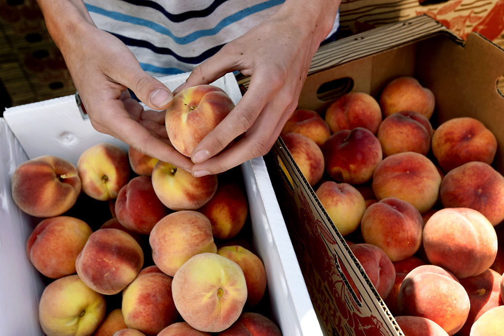 Missoula Farmers Market: Peaches rich in flavor and nutrition