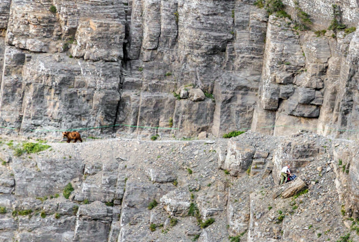 Glacier National Park: Close encounters of a grizzly kind on Highline Trail