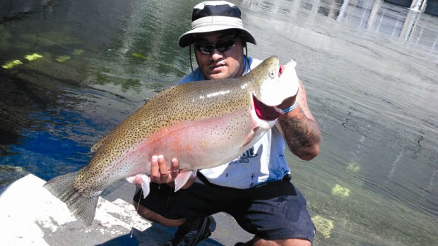 Lunker trout would shatter idaho record rainbow caught for Dworshak reservoir fishing