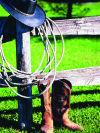 Cowgirls Cloninger, Murphy claim barrel racing championships