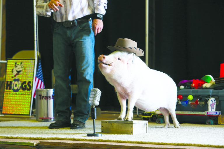 Top Hog wows crowd