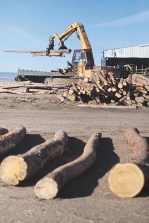 Timber mill operating again, but short-term future uncertain