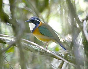 Madagascar topic of birding talk