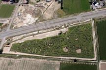 Corn maze opens today