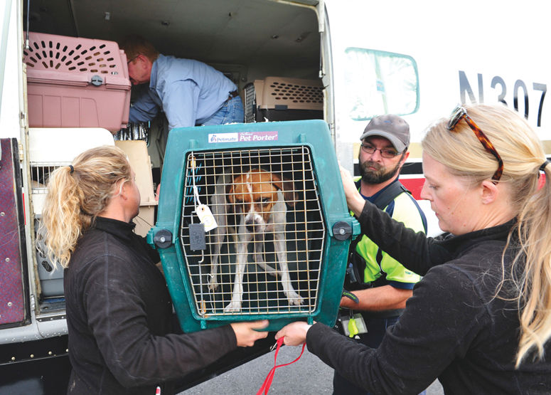 Asking for help to make space for dogs displaced by Louisiana floods