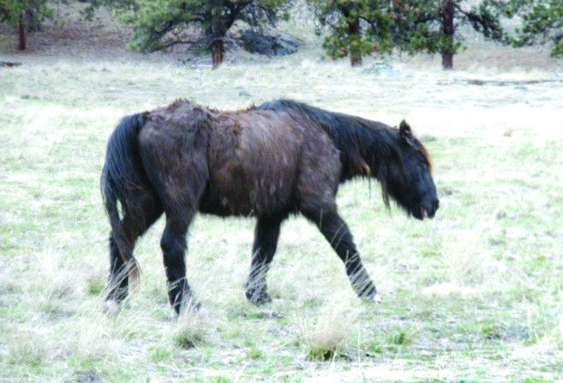 Longevity of oldest resident of Wild Horse Island surprising