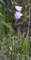 Gravelly Range wildflower tour set July 8
