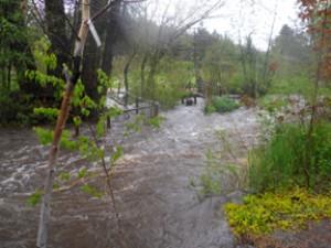 Tizer Gardens near Clancy