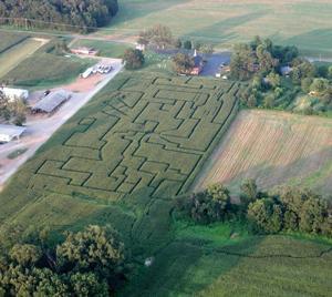 Locust Grove corn maze