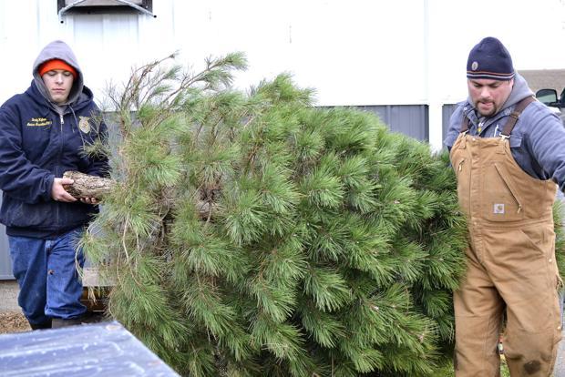 Louisa-Muscatine FFA sells Christmas trees