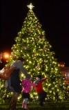 Napa Christmas Tree Lighting 2012