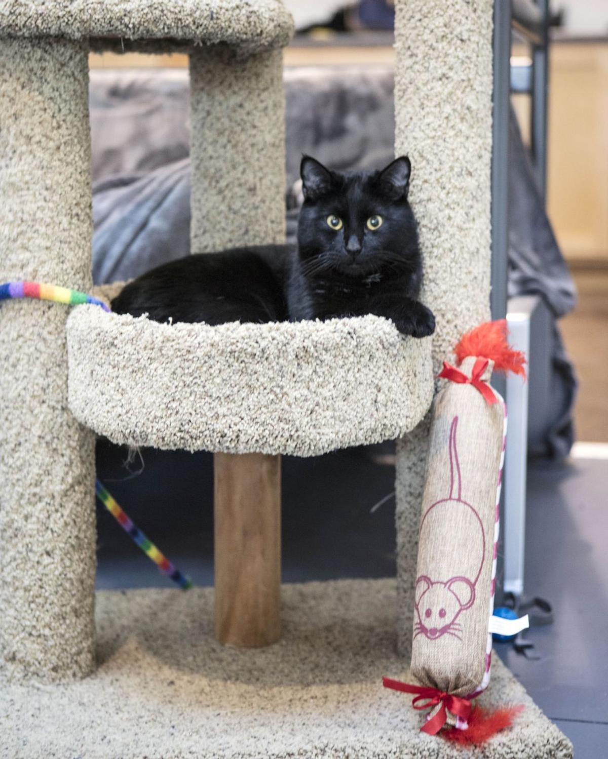 Napa Valley Gets a Cat Cafe
