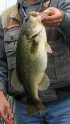 Lake Hennessey bass