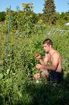 Napa Community Garden 3