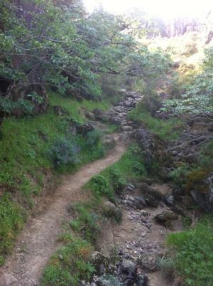 Hiking a wilderness trail