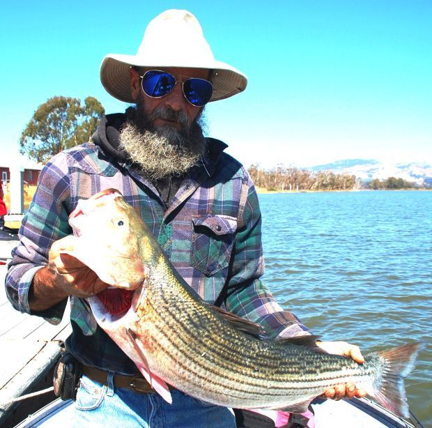 Bigger stripers already showing up on napa river for Napa river fishing