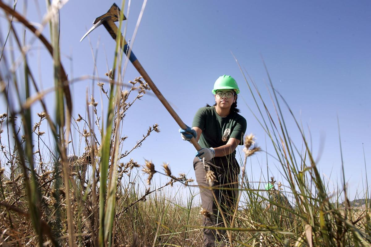 summer jobs program helps youth and the environment local news conservation corps north bay