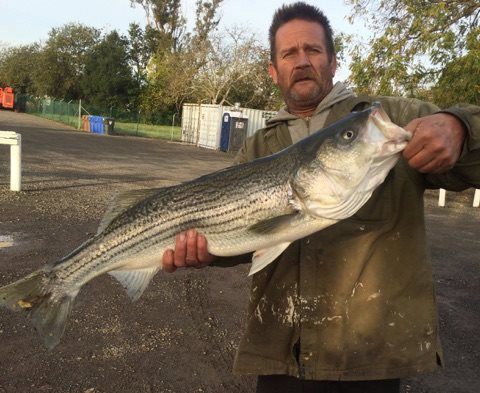 The fishing report share the thanksgiving fish story with for Napa river fishing