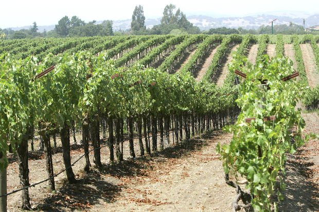Dry, warm winter has growers predicting early harvest