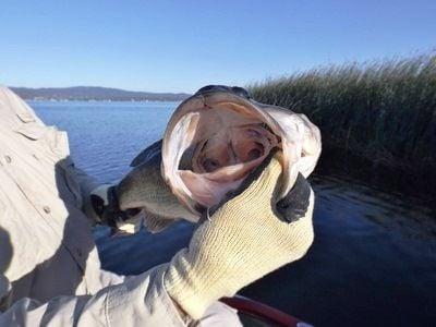 Fishing report lake berryessa kokanee bite continues for Berryessa fishing report