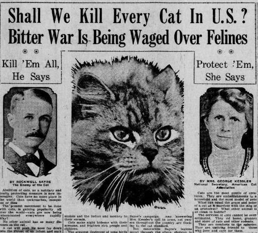 The Bizarre Logic of a Cat Hater