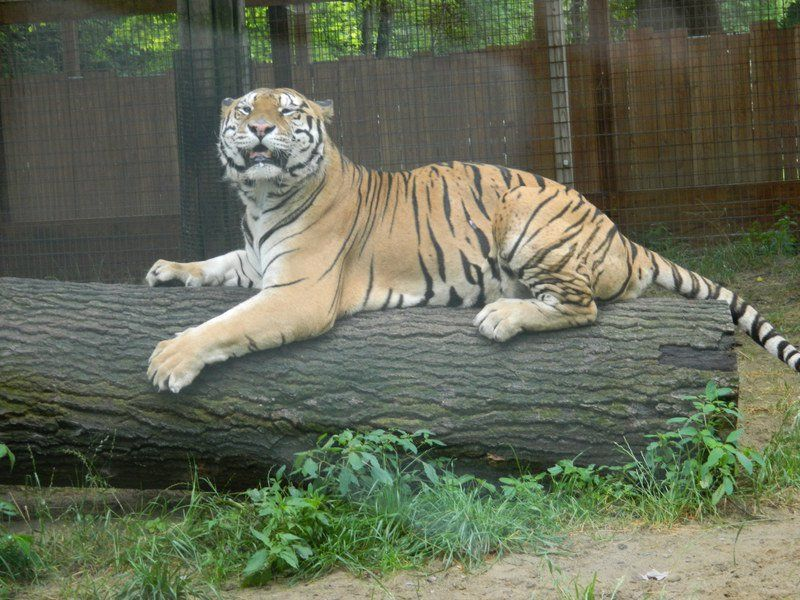 Living treasures animal park discount coupons