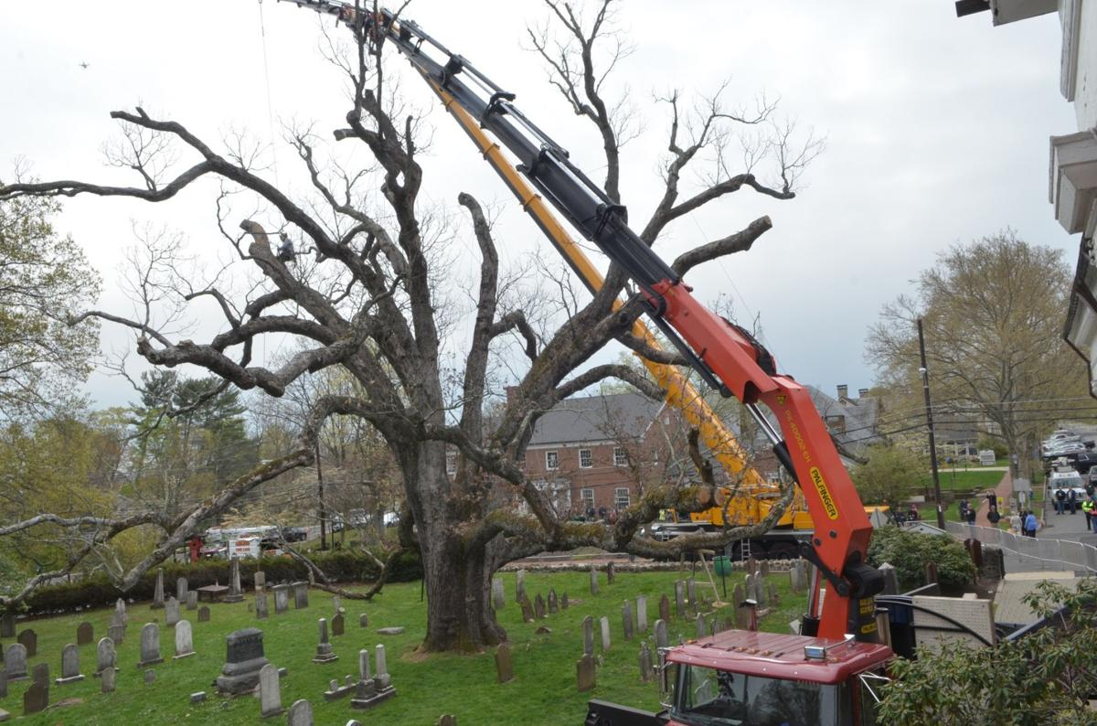 Sorrow as the' holy oak' of Basking Ridge comes down